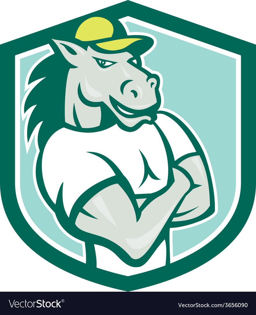 Horse arms crossed shield cartoon vector   Price: 1 Credit (USD $1)