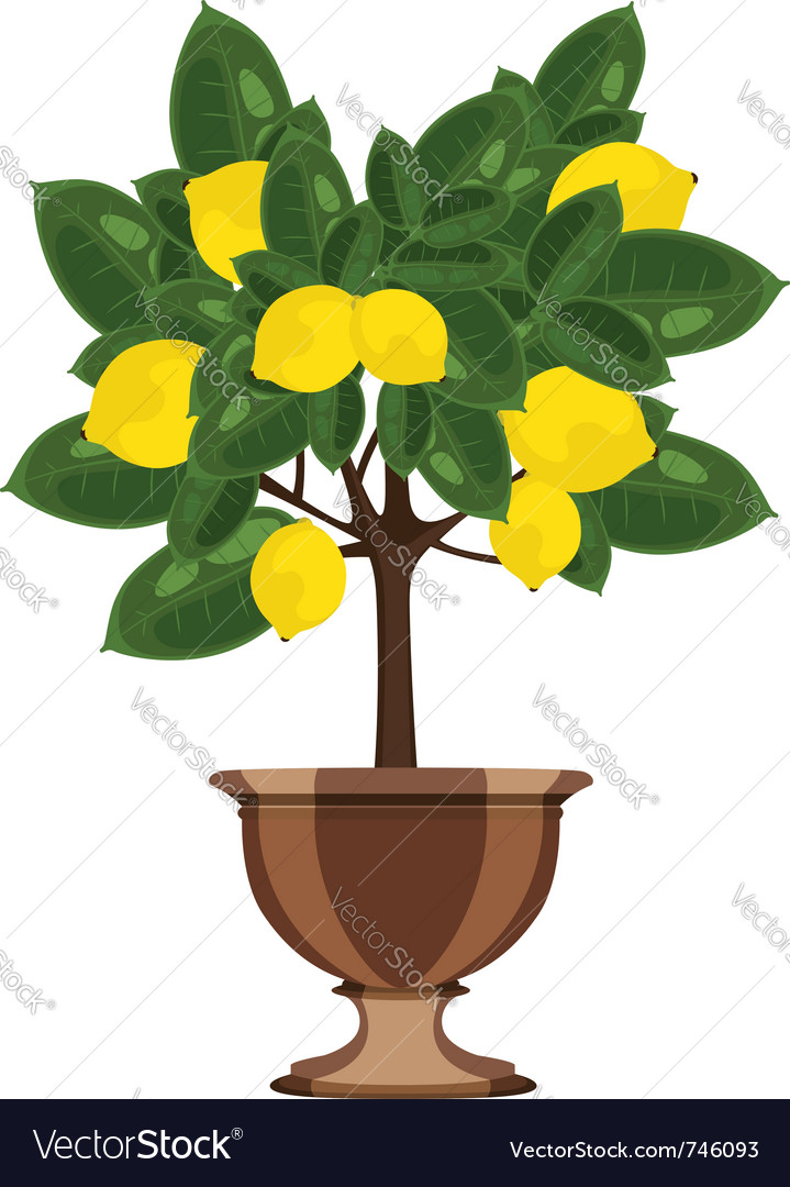 Lemon tree in a flowerpot vector | Price: 1 Credit (USD $1)