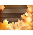 Autumn background with colored leaves plus eps10 vector