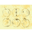 Set of highly detailed hand drawn apples vector