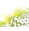 Spring tree blossom flowers vector