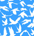 Doves and pigeons seamless pattern on blue vector
