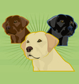 Labrador retrievers vector