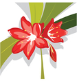 Flower red lily vector
