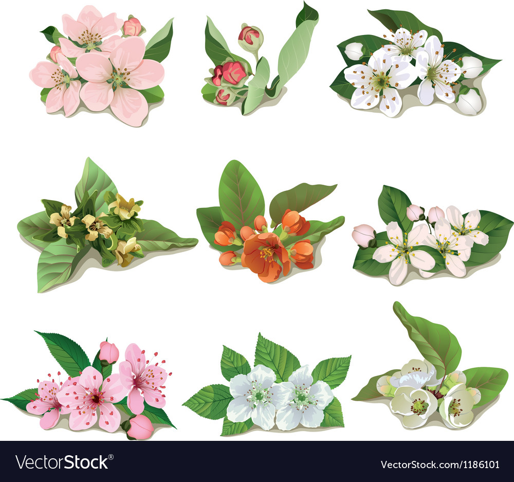 Set of flowers on fruit trees vector | Price: 3 Credit (USD $3)