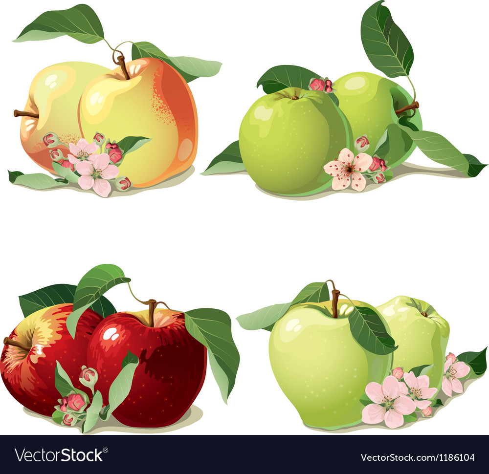 Set of ripe apples vector | Price: 3 Credit (USD $3)