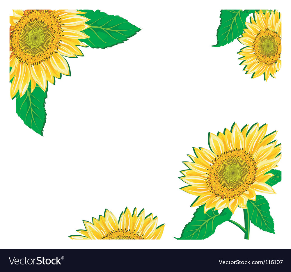 Sunflower framework vector | Price: 1 Credit (USD $1)