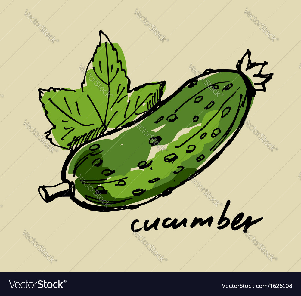 Hand drawn cucumber vector | Price: 1 Credit (USD $1)