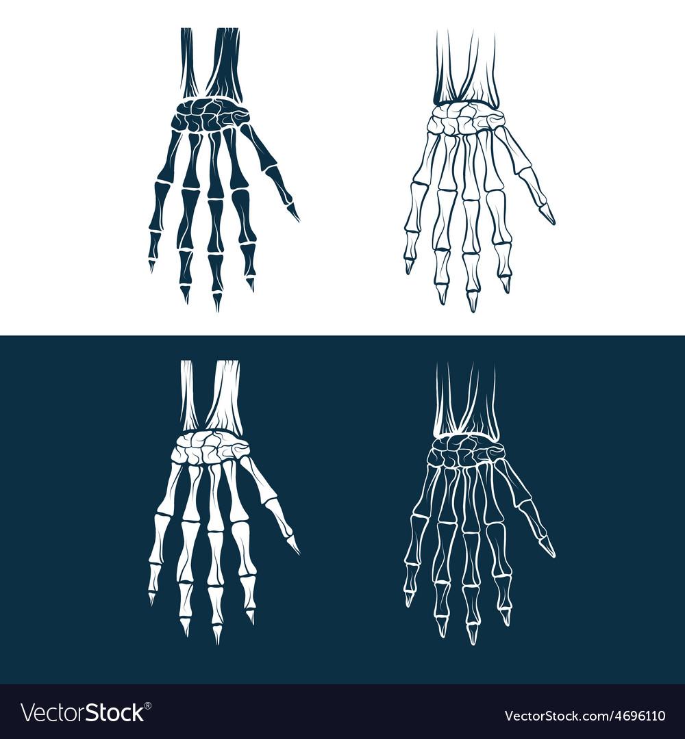 Set of skeleton hands vector | Price: 1 Credit (USD $1)