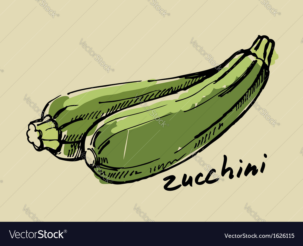 Hand drawn zucchini vector | Price: 1 Credit (USD $1)
