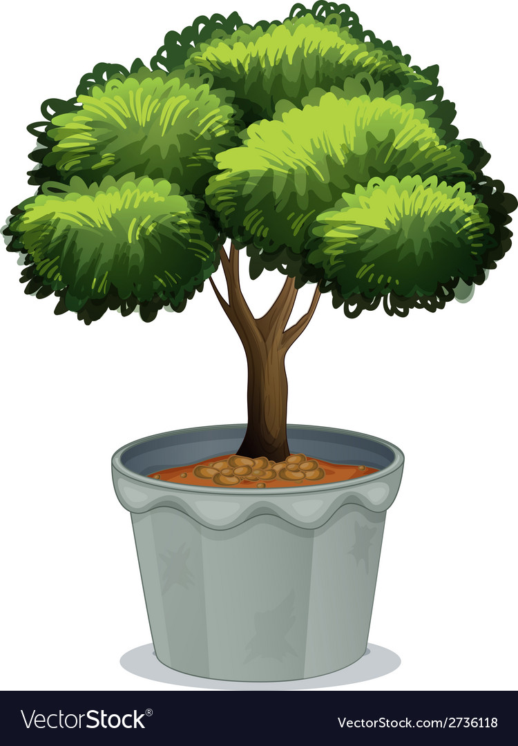 Potted plant vector | Price: 1 Credit (USD $1)