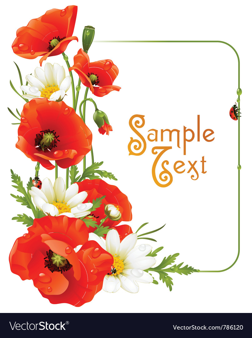 Flower frame 8 poppy and camomile vector | Price: 3 Credit (USD $3)