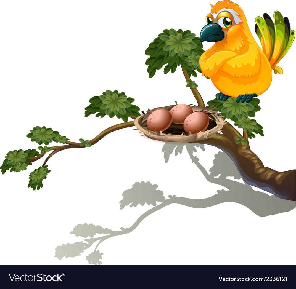 An orange bird watching the eggs vector | Price: 1 Credit (USD $1)