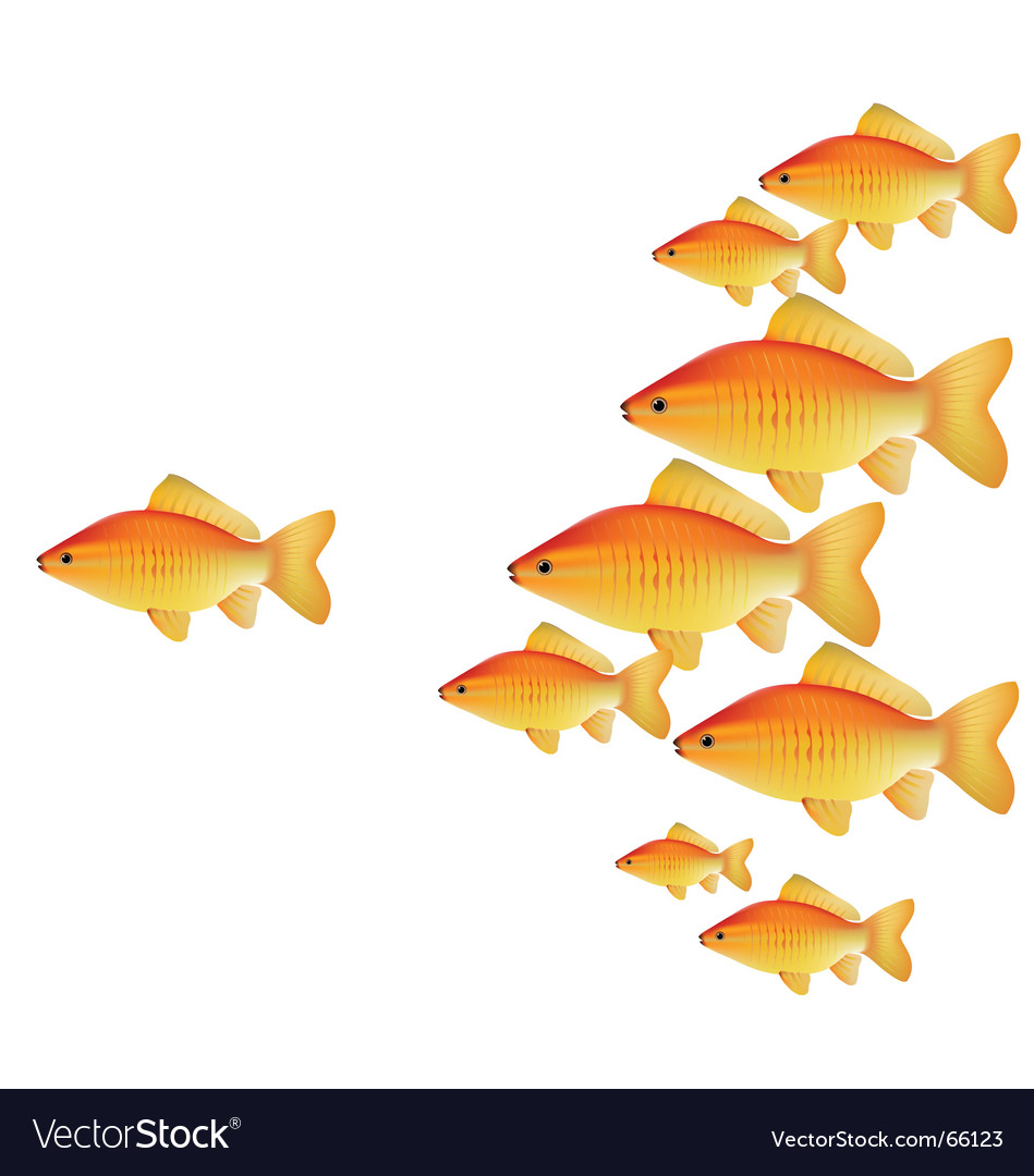 Gold fishes vector | Price: 1 Credit (USD $1)