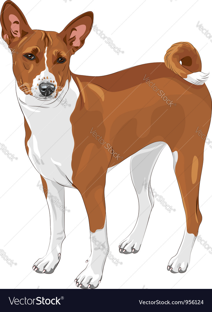 Basenji hunting dog vector | Price: 3 Credit (USD $3)