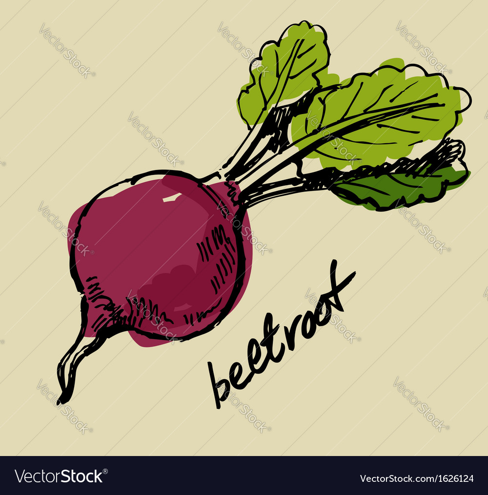 Hand drawn beet vector | Price: 1 Credit (USD $1)