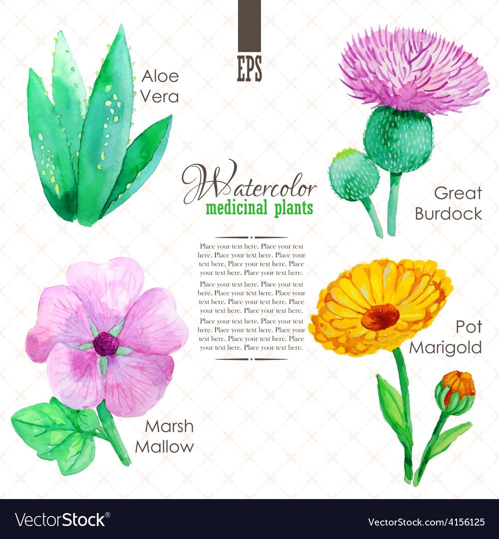 Set of watercolor madicinal plants vector | Price: 1 Credit (USD $1)