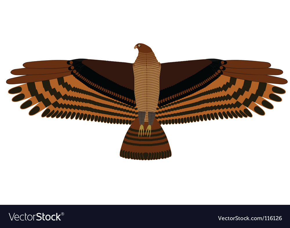 Hovering eagle vector | Price: 1 Credit (USD $1)