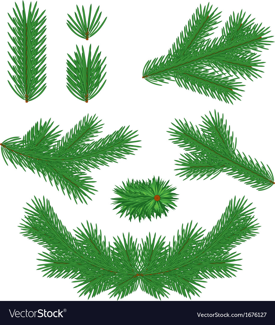 Fir tree branches vector | Price: 1 Credit (USD $1)