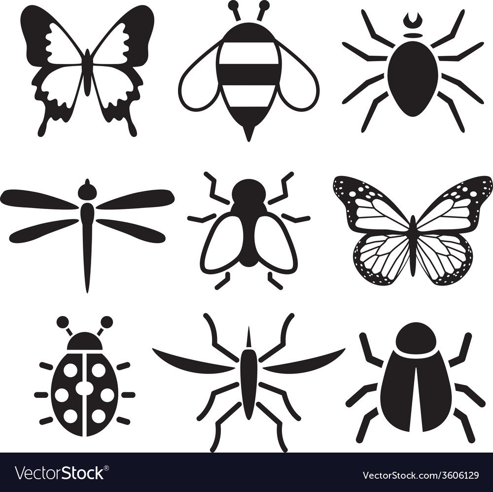 Insect collection vector | Price: 1 Credit (USD $1)