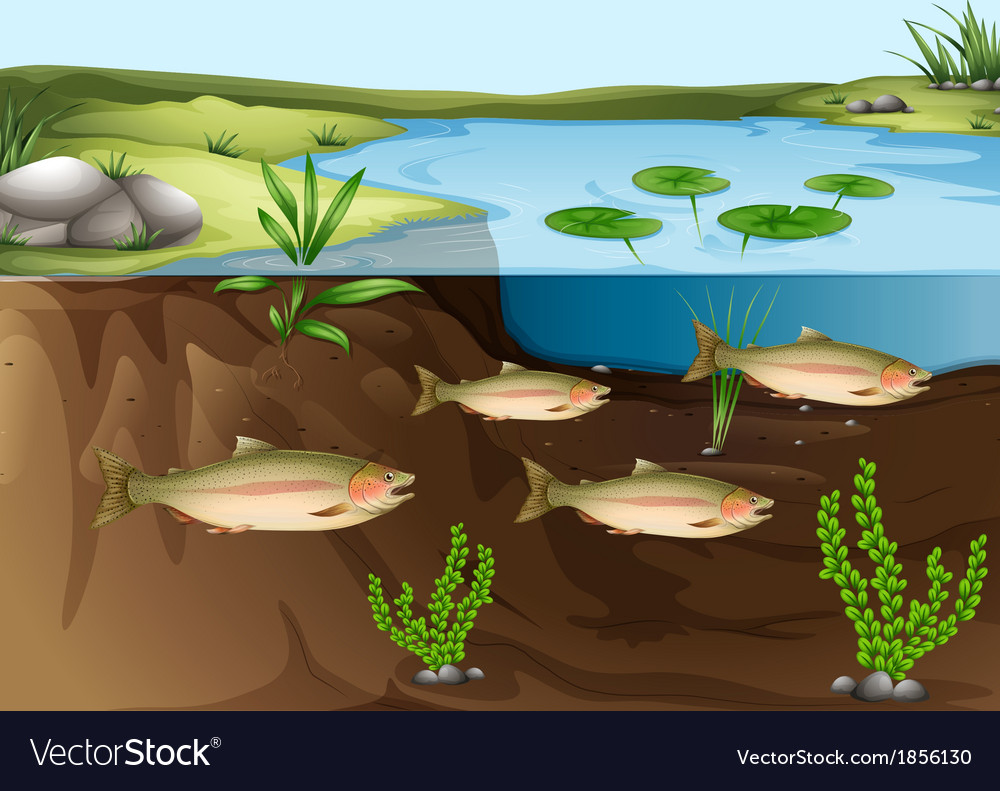 An ecosystem under the pond vector | Price: 1 Credit (USD $1)
