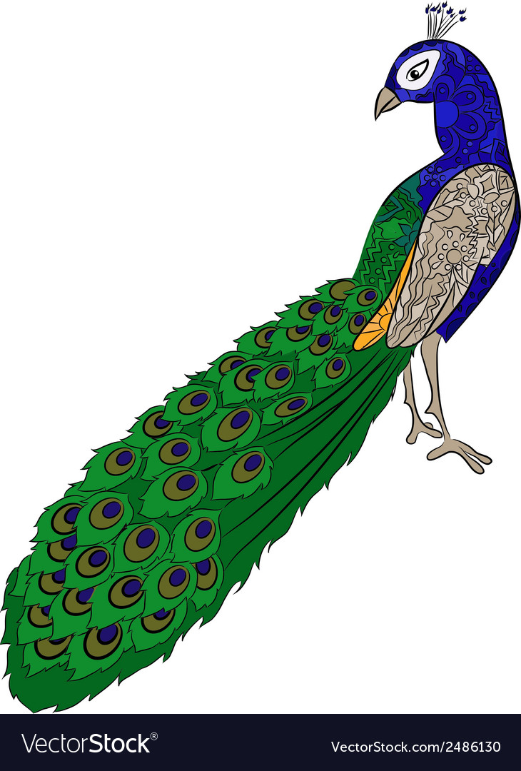 Hand drawing peacock vector | Price: 1 Credit (USD $1)