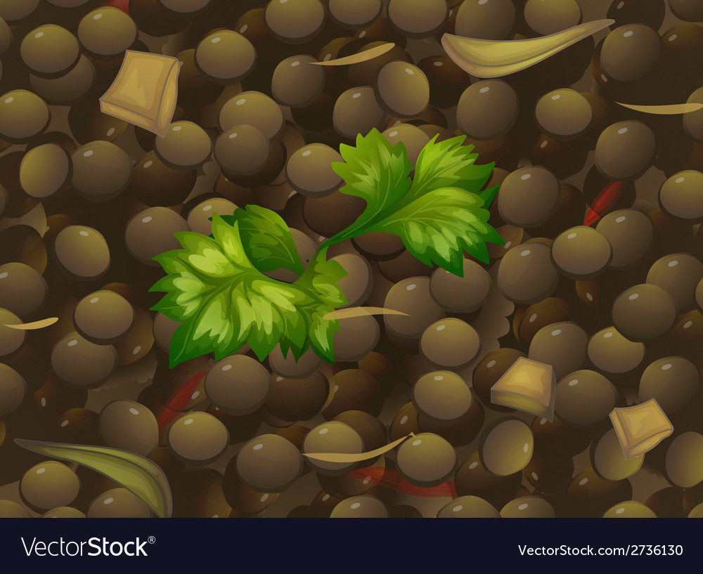 Lentil vector | Price: 1 Credit (USD $1)