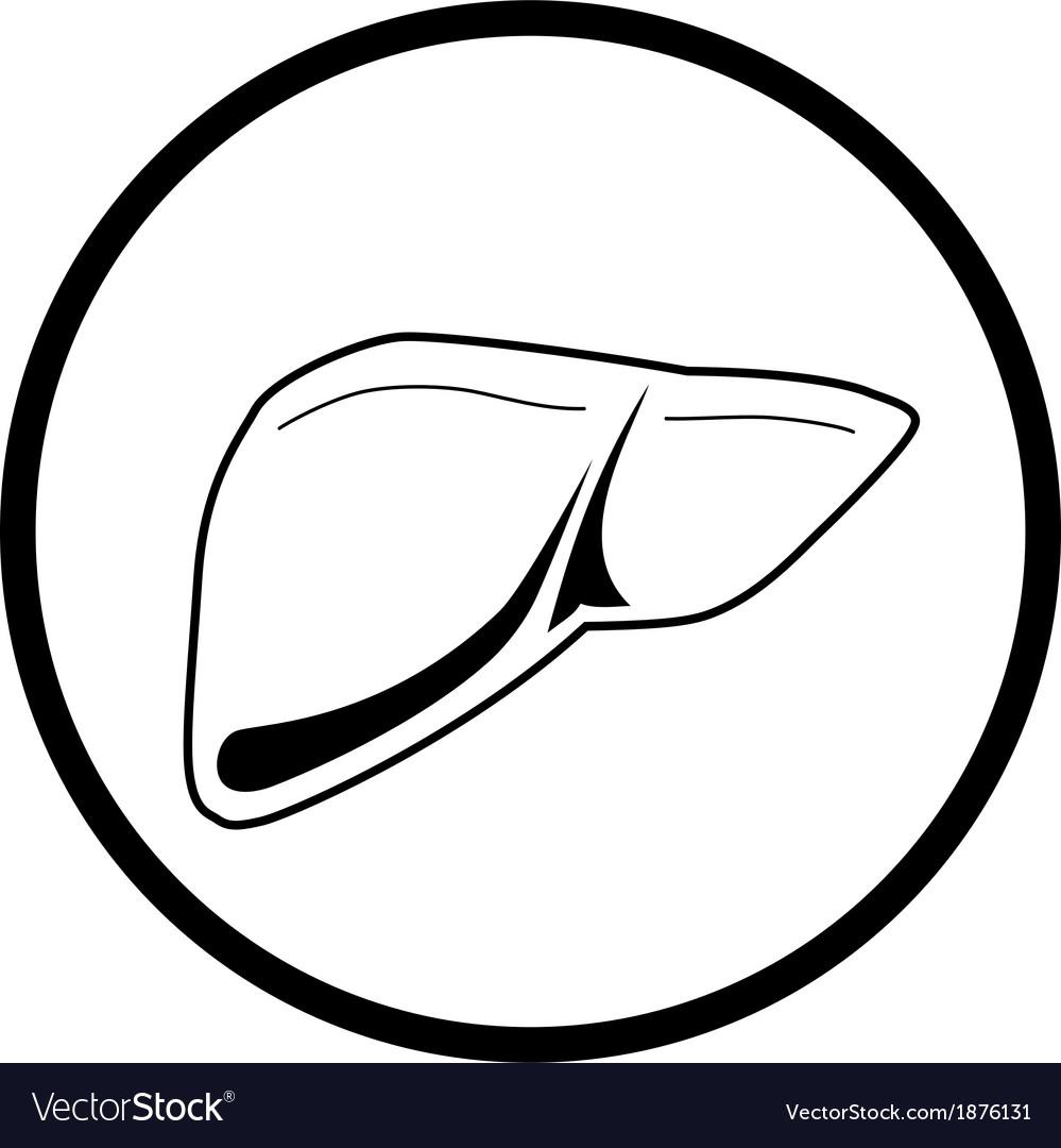 Liver icon vector   Price: 1 Credit (USD $1)