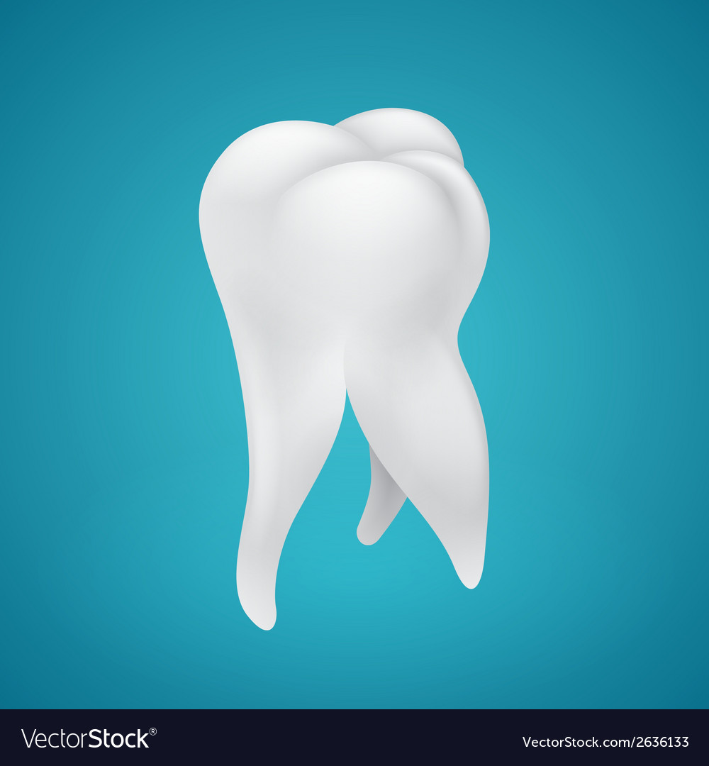 Human healthy tooth vector | Price: 1 Credit (USD $1)