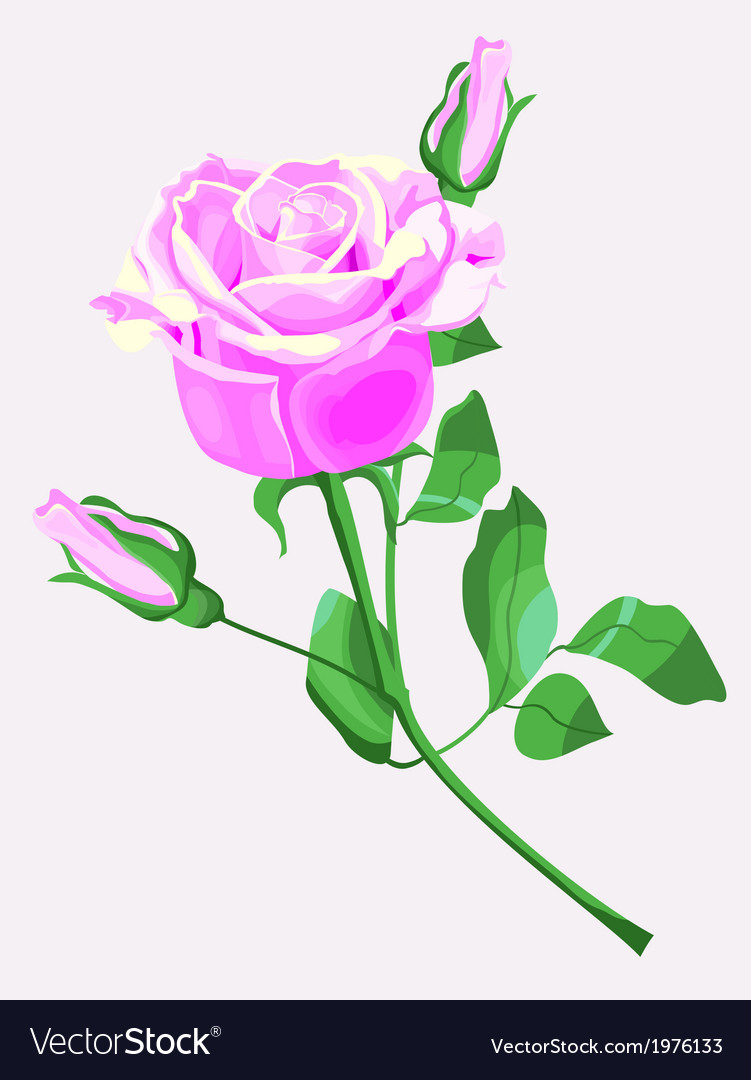 Ornate of pink rose vector | Price: 1 Credit (USD $1)