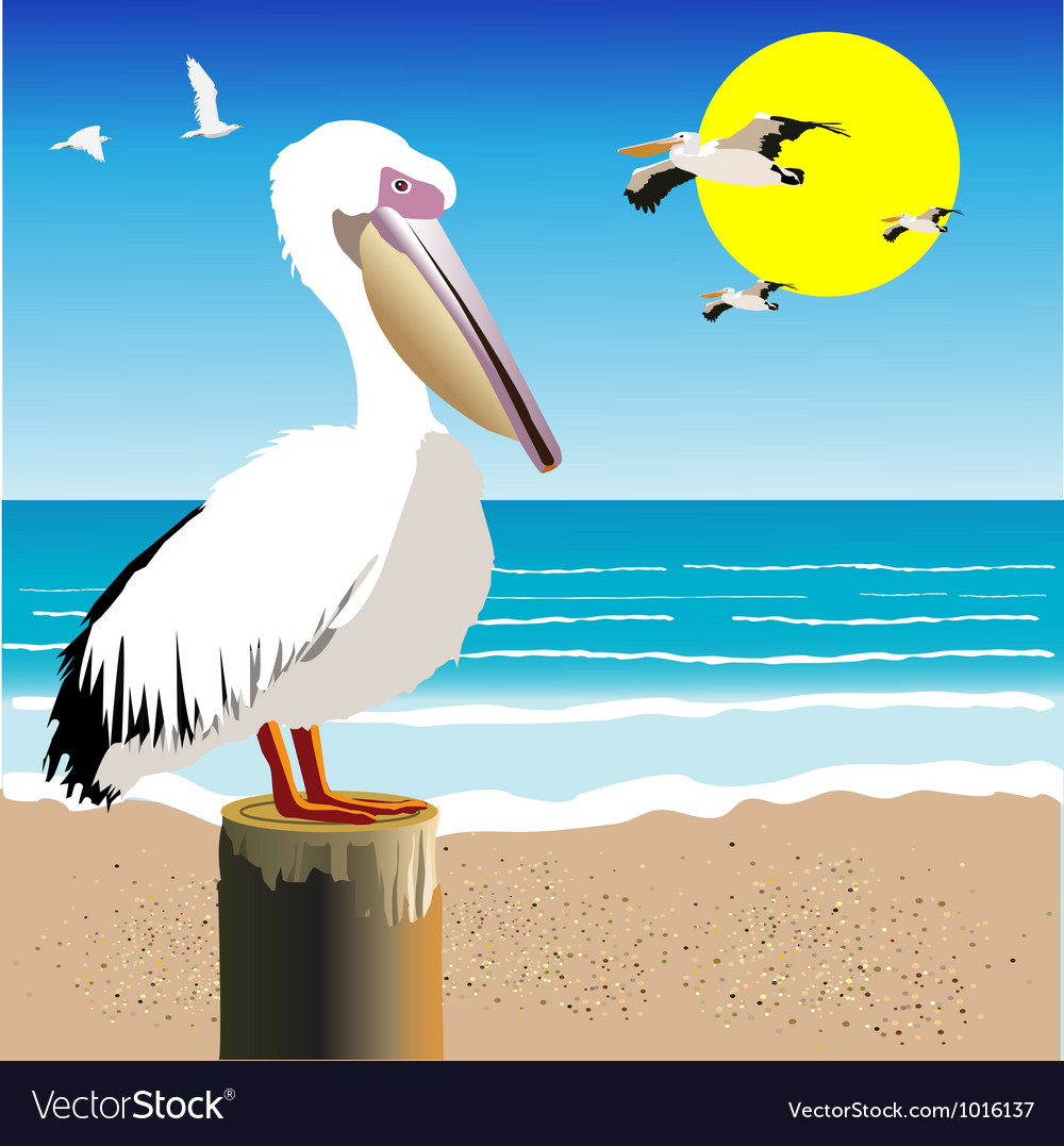 Pelican watch vector | Price: 1 Credit (USD $1)