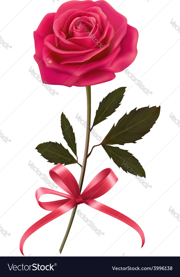 Background with rose and a bow vector | Price: 3 Credit (USD $3)