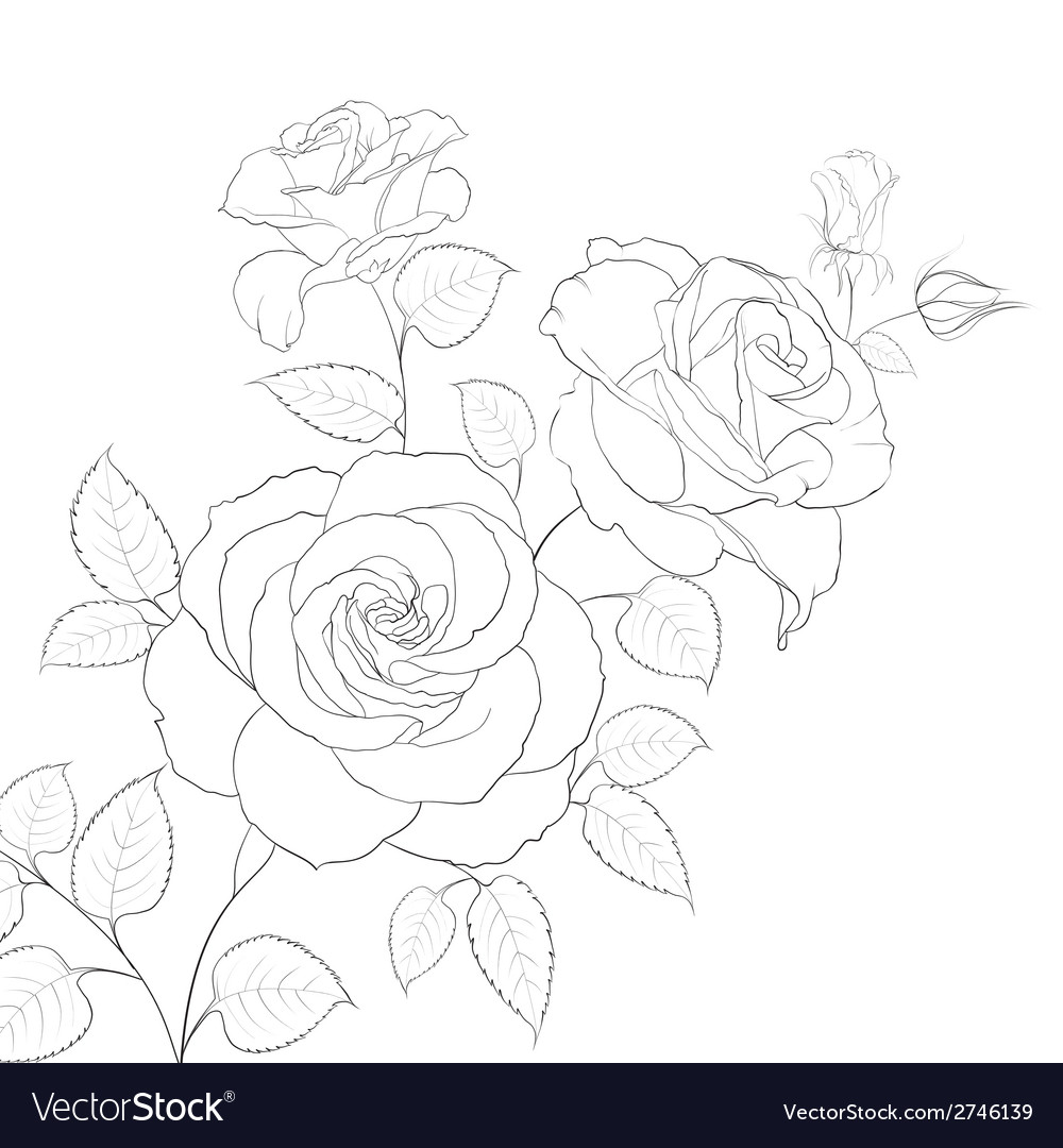 White rose isolated vector | Price: 1 Credit (USD $1)