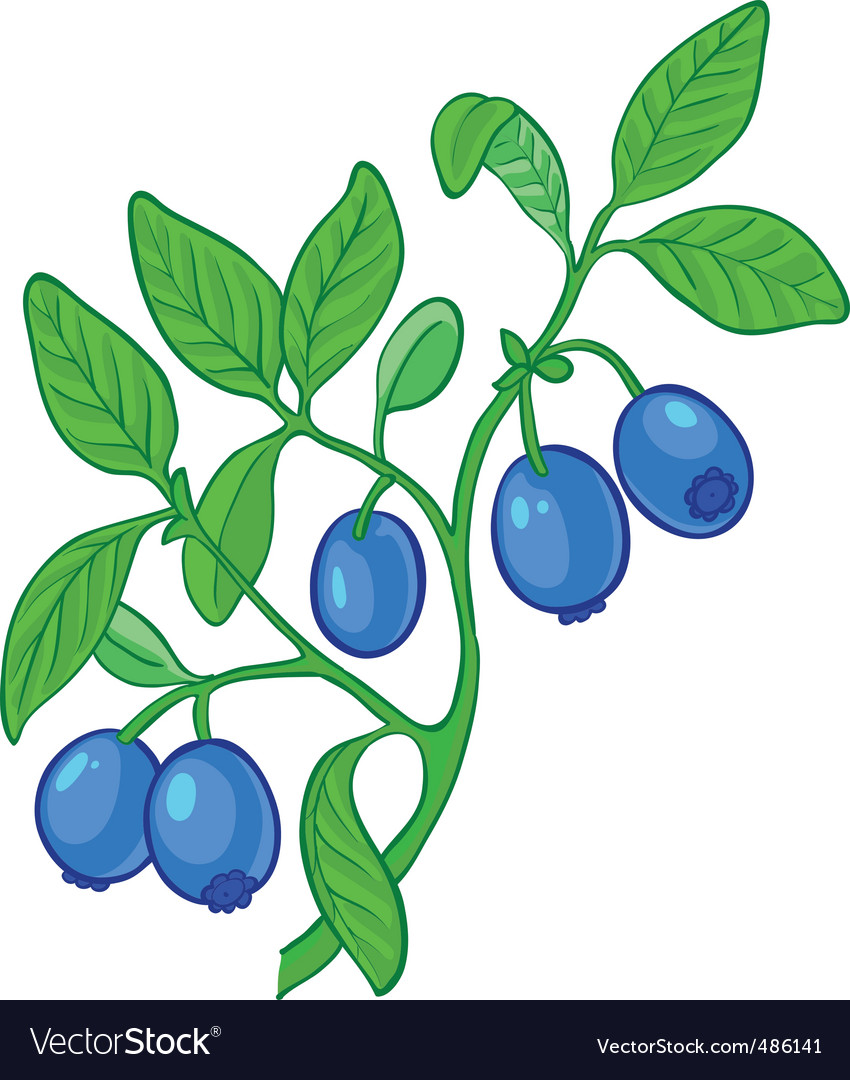 Blueberry branch vector | Price: 3 Credit (USD $3)