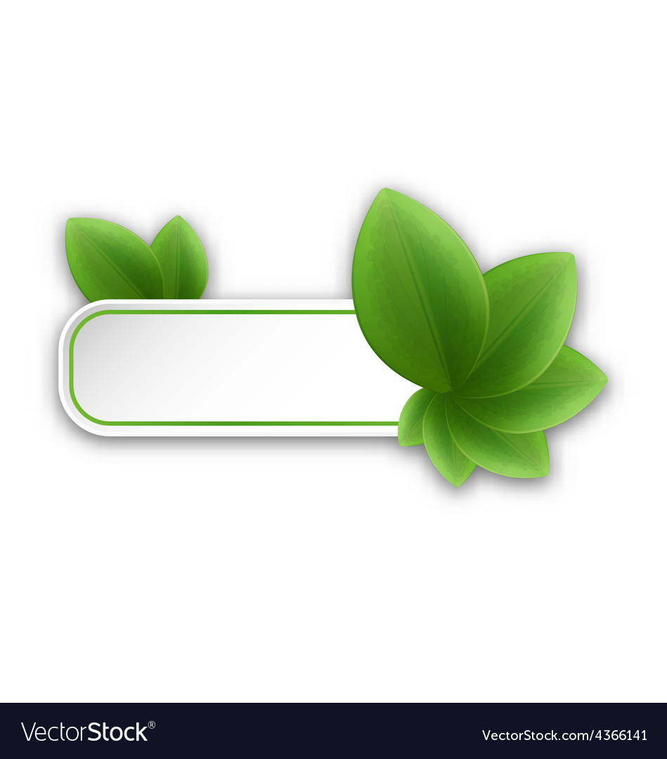 Eco friendly banner with green leaves vector | Price: 1 Credit (USD $1)