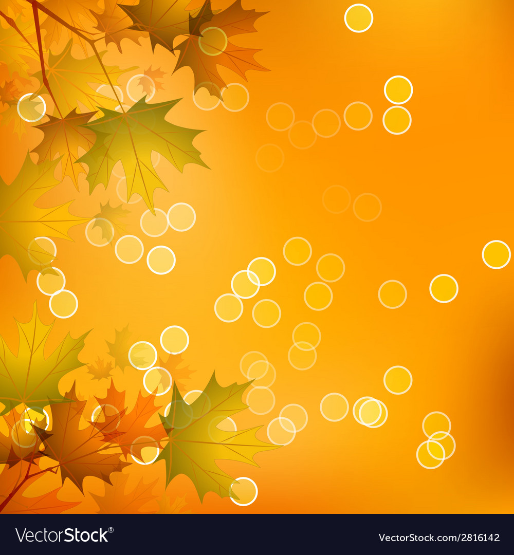 Maple leaves of autumn vector | Price: 1 Credit (USD $1)
