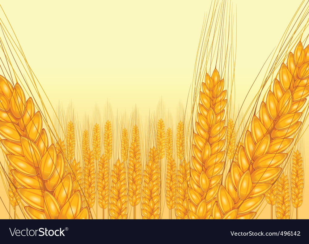 Wheat harvest icon vector | Price: 1 Credit (USD $1)