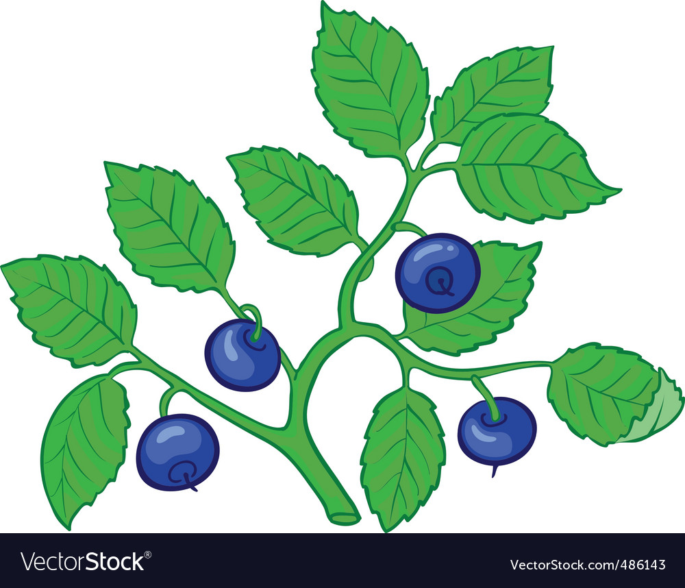Bilberry branch vector | Price: 3 Credit (USD $3)