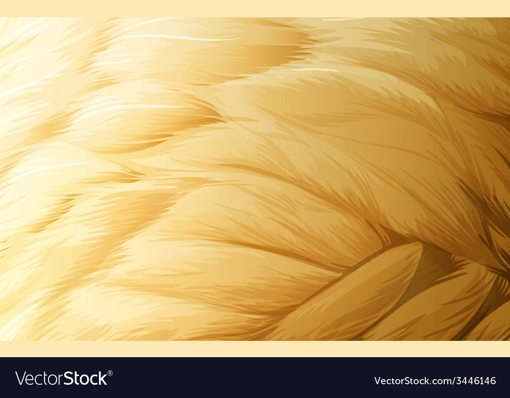 A feather texture vector | Price: 3 Credit (USD $3)