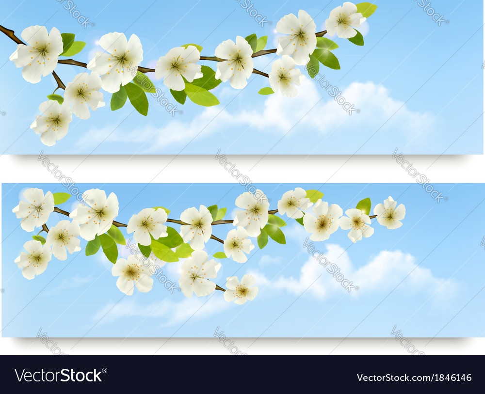 Three spring banners with blossoming tree brunch vector | Price: 1 Credit (USD $1)
