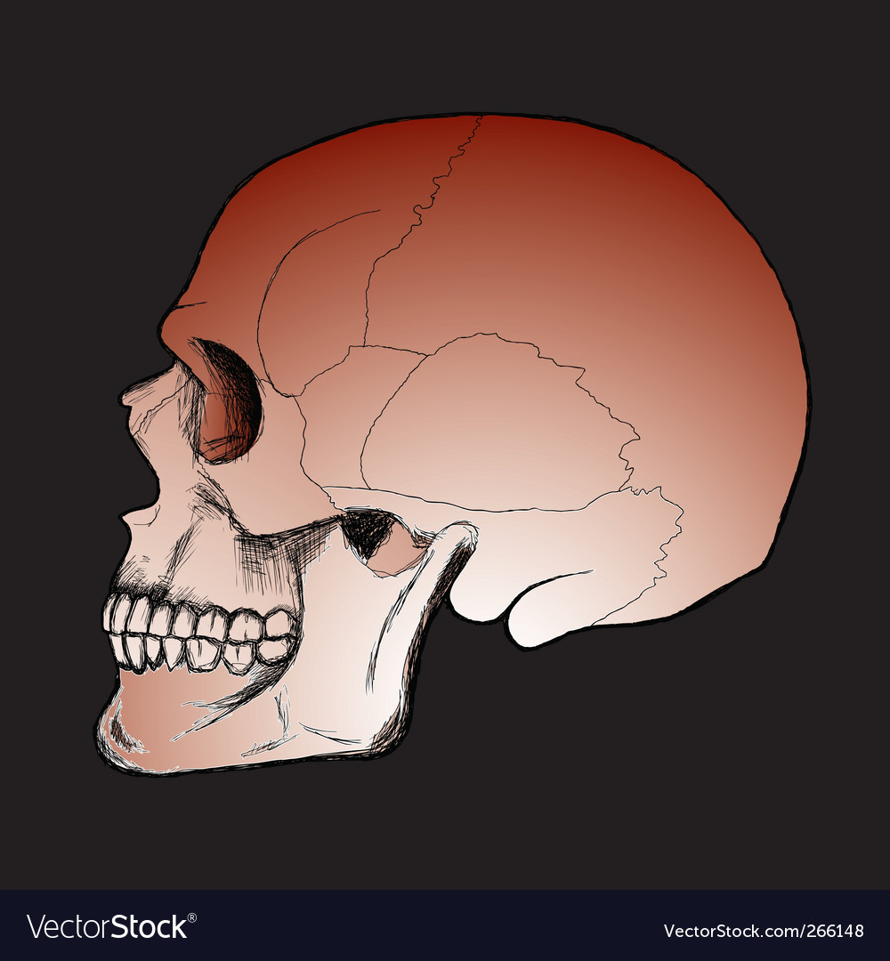 Skull on the black background vector   Price: 1 Credit (USD $1)