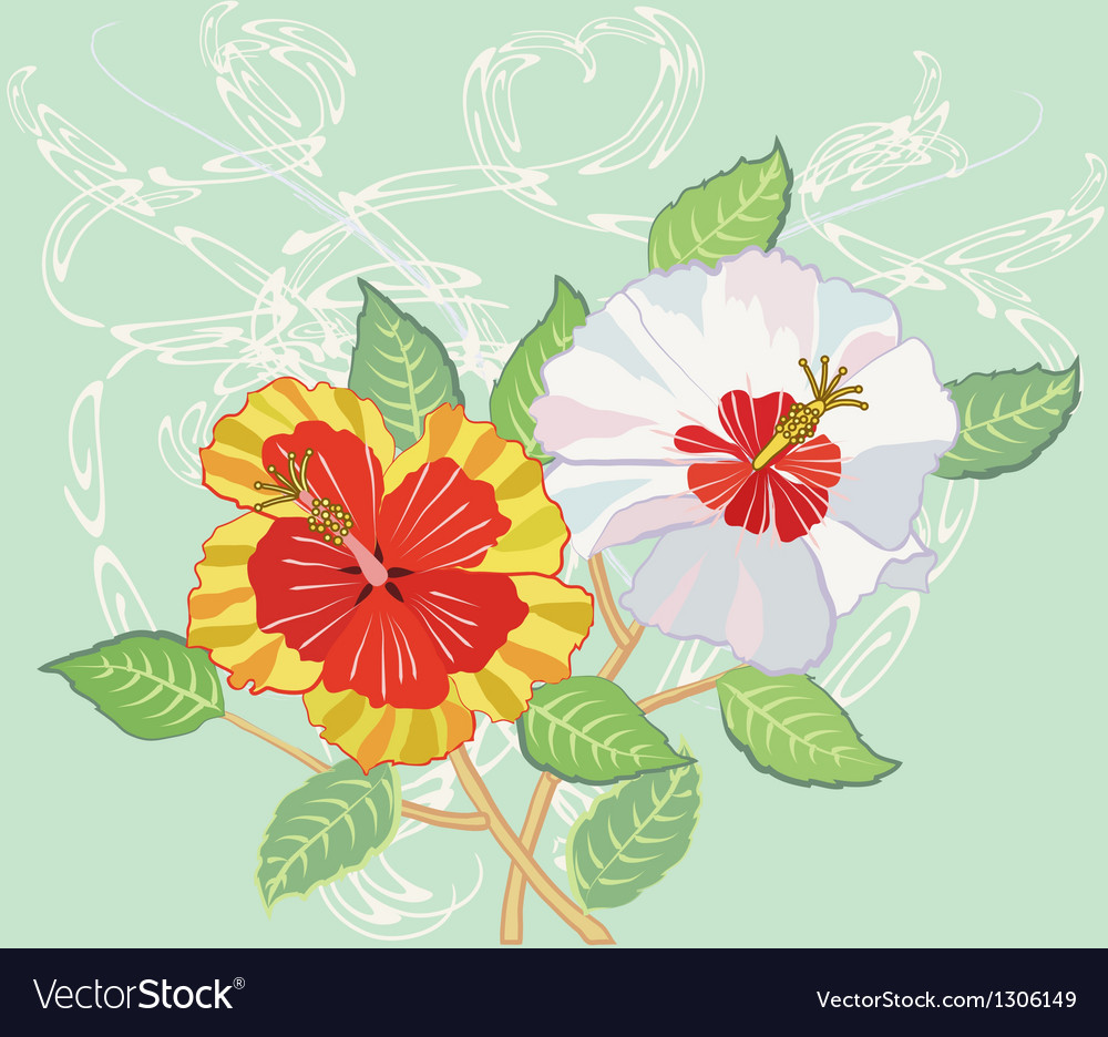 Bouquet of hibiscus on light green background vector   Price: 1 Credit (USD $1)