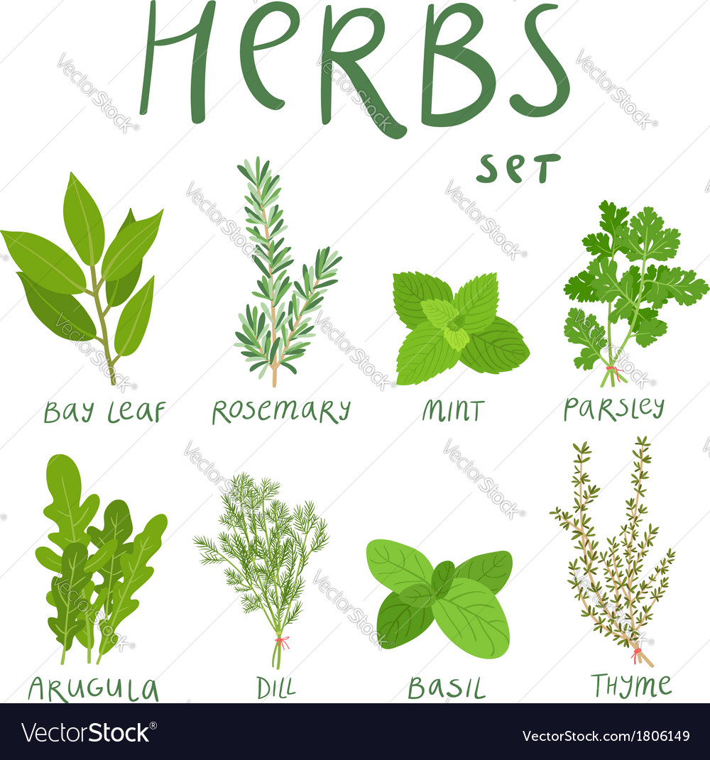 Herbs vector | Price: 1 Credit (USD $1)