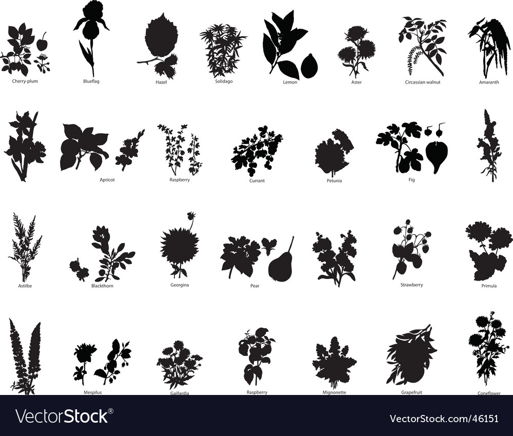 Berries and flower silhouettes vector | Price: 1 Credit (USD $1)