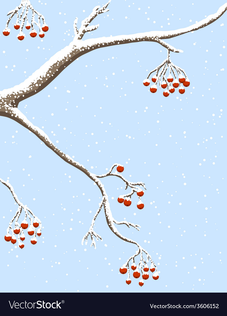 Rowanberries under snow vector | Price: 1 Credit (USD $1)
