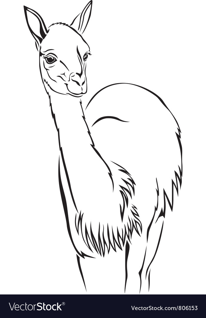 Guanaco vector | Price: 1 Credit (USD $1)