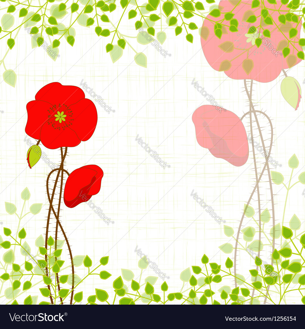 Springtime red poppy vector
