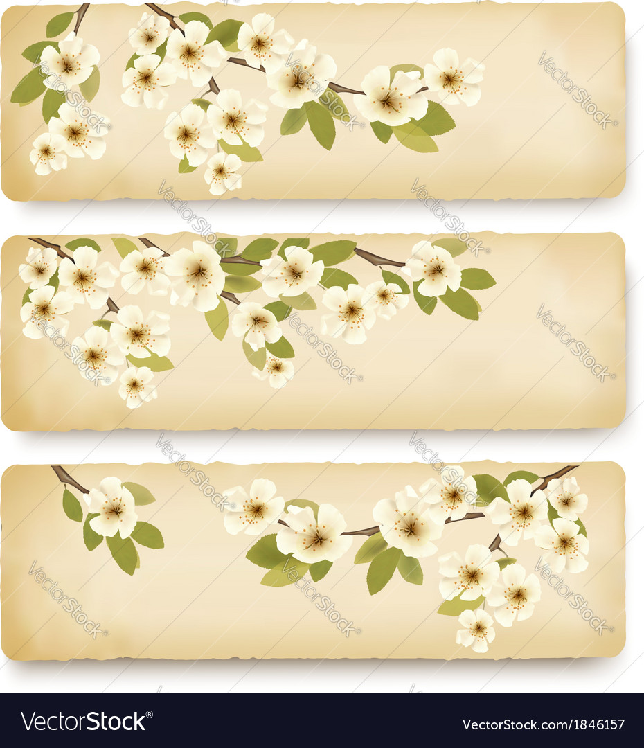 Three retro spring banners with blossoming tree vector | Price: 1 Credit (USD $1)