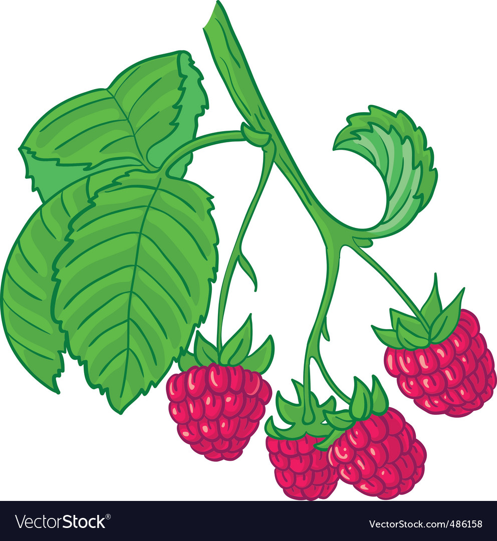 Raspberry branch vector | Price: 3 Credit (USD $3)