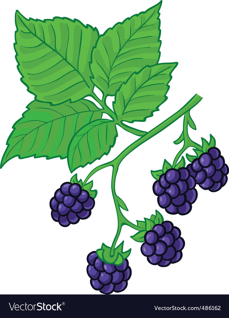 Blackberry branch vector | Price: 3 Credit (USD $3)